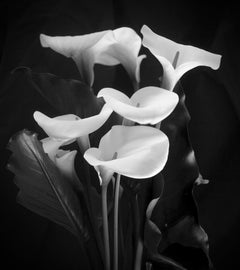 Arum Lilies -Signed limited edition fine art print, Black and white photography