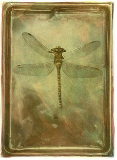 Dragonfly - Signed limited edition fine art print, Color photography, insect