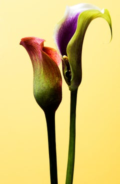 Flowers - Signed limited edition fine art print, Color nature photography