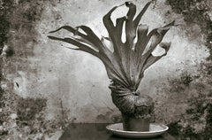 Fougère -Signed limited edition fine art print,Black and white plant photography
