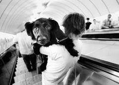 Metro Dog - Signed limited edition fine art print, Black and white photo, Analog