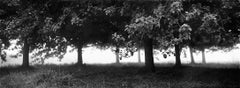 Orchard - Signed limited edition fine art print, Black and white photography