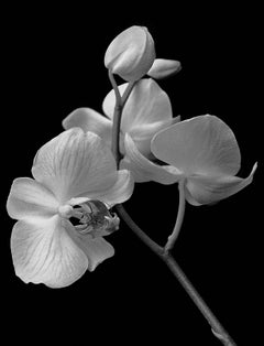 Orchid-Signed limited edition fine art print, Black and white nature photography