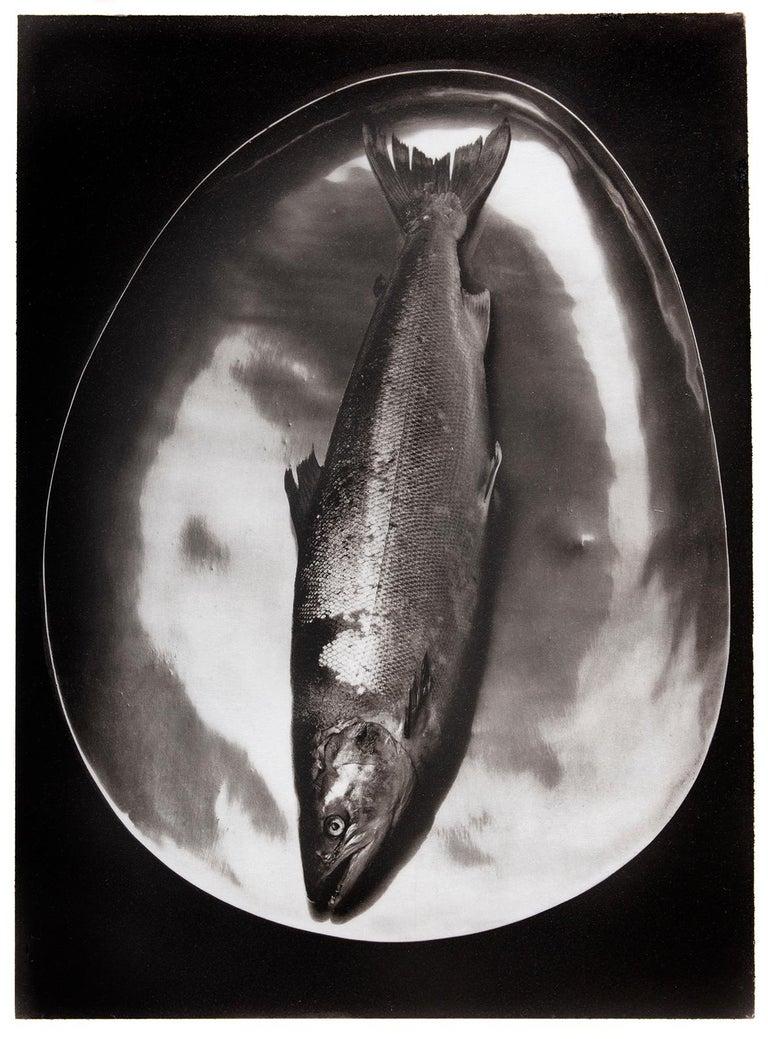Salmon - Platinum Palladium print on vellum over silver, limited edition, 1985 - Black Black and White Photograph by Ian Sanderson