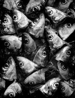 Sardines - Signed limited edition fine art print,Black and white photo, Analog