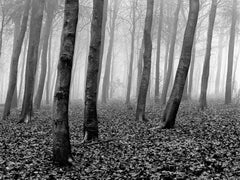 Wood-Signed limited edition fine art print,Black and white photography,Landscape