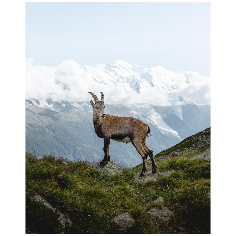 Ibex Mont Blanc by Christiaan Nies