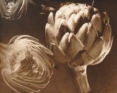 Untitled (Artichokes)