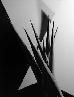 Agave Design I