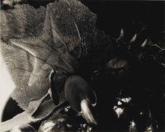 Shells Vintage Unique Photograph Signed Silver Gelatin Photo