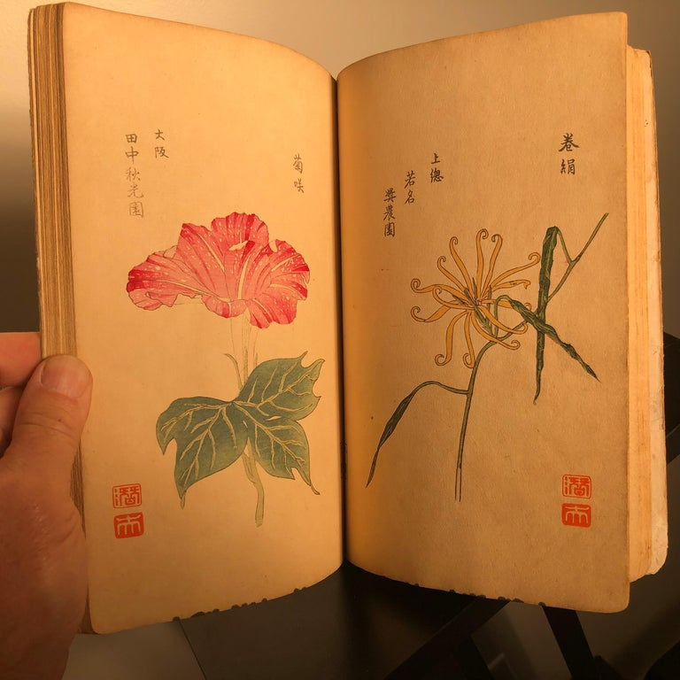 Important Japan Antique Woodblock Morning Glories 46 Vibrant Color Prints, 1903 For Sale 3