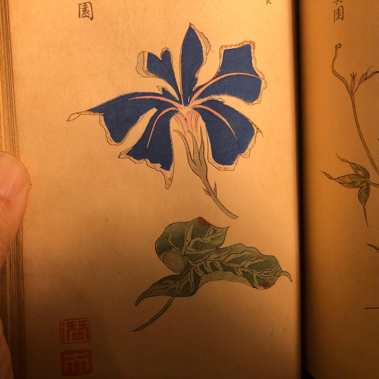Important Japan Antique Woodblock Morning Glories 46 Vibrant Color Prints, 1903 For Sale 6