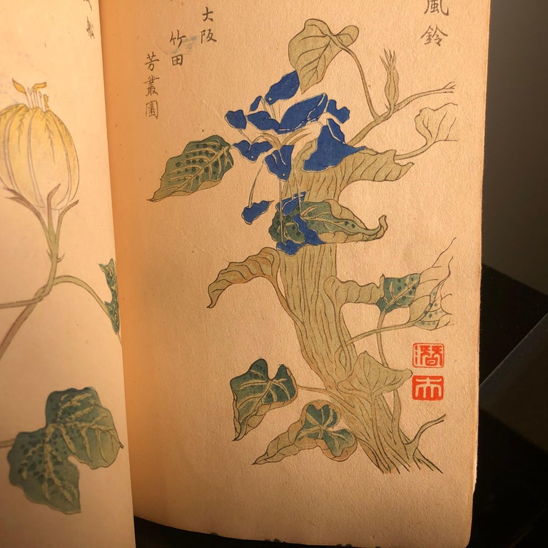 Important Japan Antique Woodblock Morning Glories 46 Vibrant Color Prints, 1903 For Sale 9