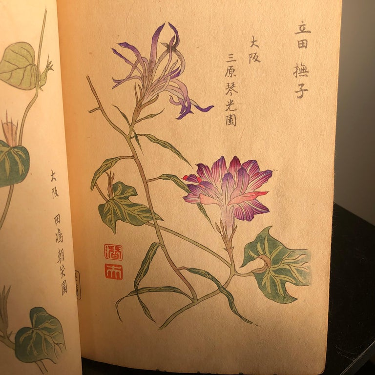 Important Japan Antique Woodblock Morning Glories 46 Vibrant Color Prints, 1903 For Sale 10