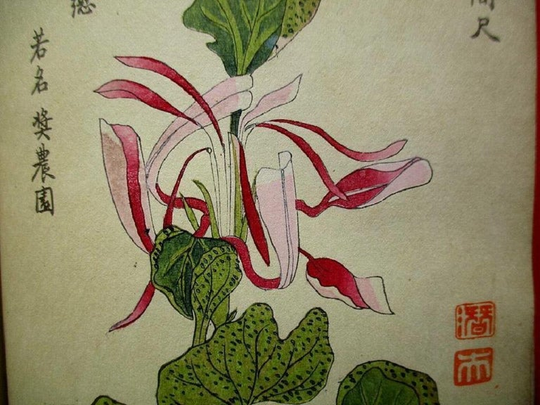 Important Japan Antique Woodblock Morning Glories 46 Vibrant Color Prints, 1903 In Good Condition For Sale In Shelburne, VT