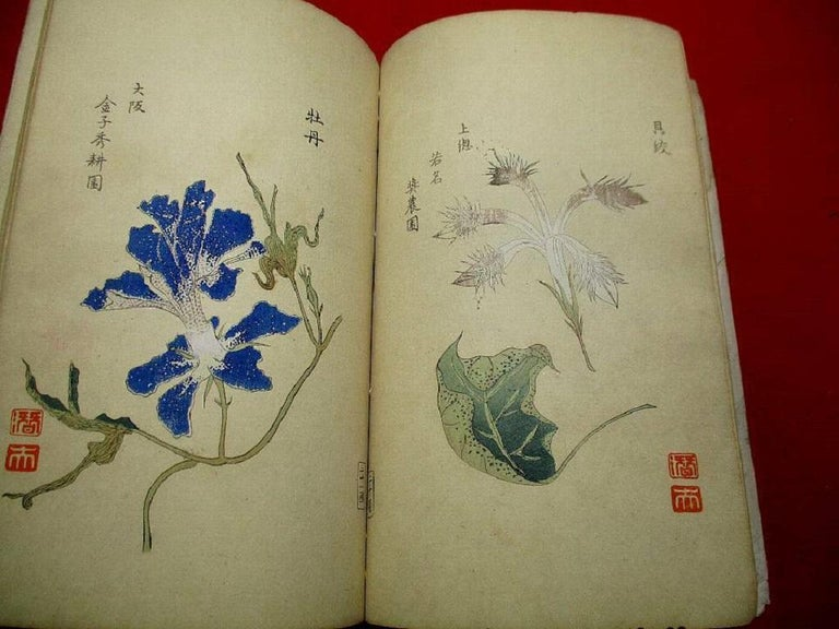 20th Century Important Japan Antique Woodblock Morning Glories 46 Vibrant Color Prints, 1903 For Sale