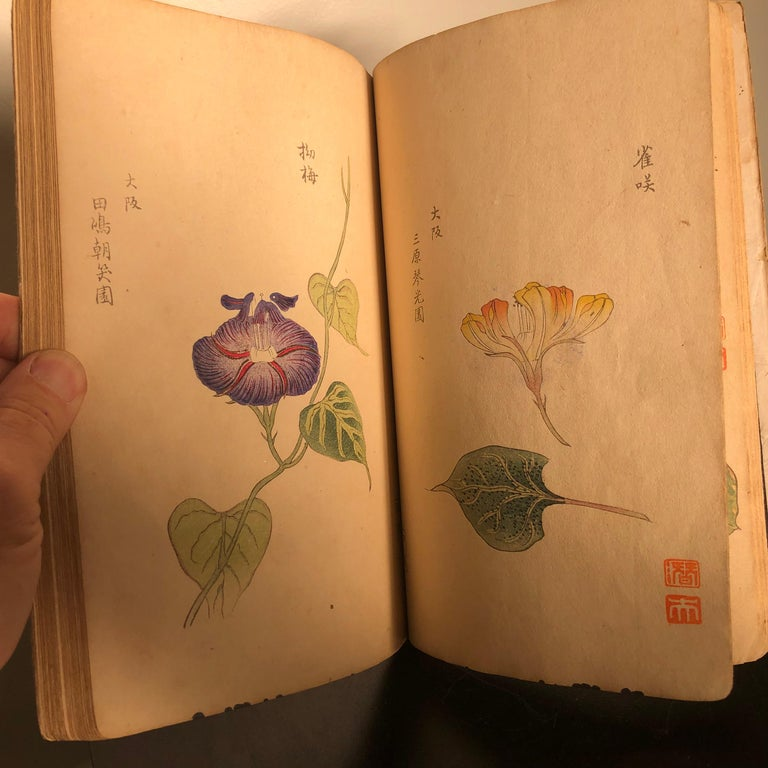 Important Japan Antique Woodblock Morning Glories 46 Vibrant Color Prints, 1903 For Sale 1