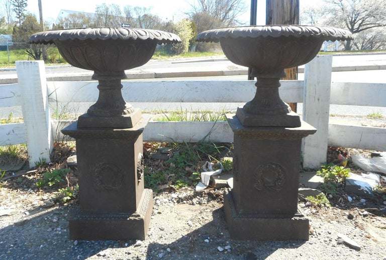 This wonderful pair of cast iron urns feature a column base holding up a very wide urn with a pedestal bottom. Lovely designs on the column base and etched detail along the top edges shows true quality casting. This amazing pair of urns detach from