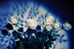 The Labyrinth Les Roses Blanches Sont Innocents, Medium Format Color Photography