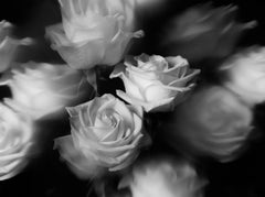The Labyrinth - Rêver de Roses, Medium Format Photography, Aluminum, Signed