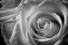 The Labyrinth - Rose Blanche No 1, Medium Format Photography, Aluminum, Signed