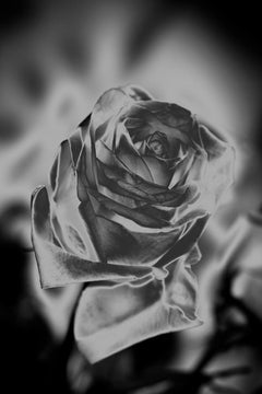 The Labyrinth - Une Rose Fleurit en Argent, Medium Format Photography, Aluminum