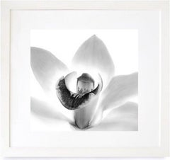 Orchid, Framed Black and White Nature Photography, 2000