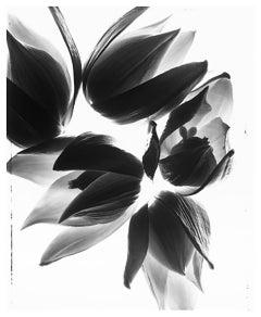 Yucca Ying