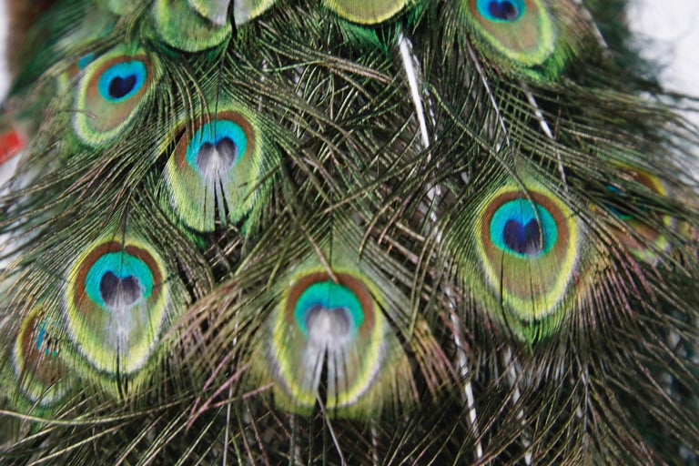 Iridescent Blue and Green Peacock Taxidermy Wall Mount Sculptures For Sale 7