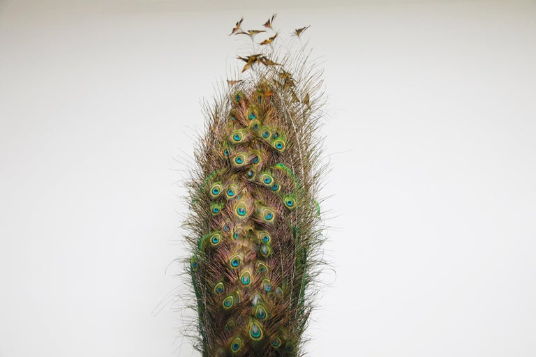 Iridescent Blue and Green Peacock Taxidermy Wall Mount Sculptures For Sale 2