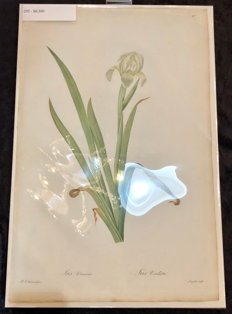 Iris Virescens, Lalics Hand Colored Engraving Signed P. J. Redoute For Sale 4