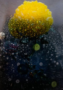 Petites Natures #19 - yellow flower dots of water abstract contemporary photo