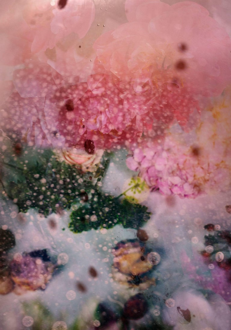 Isabelle Menin Still-Life Photograph - Petites Natures #25 -pink abstract vibrant contemporary flower nature photo