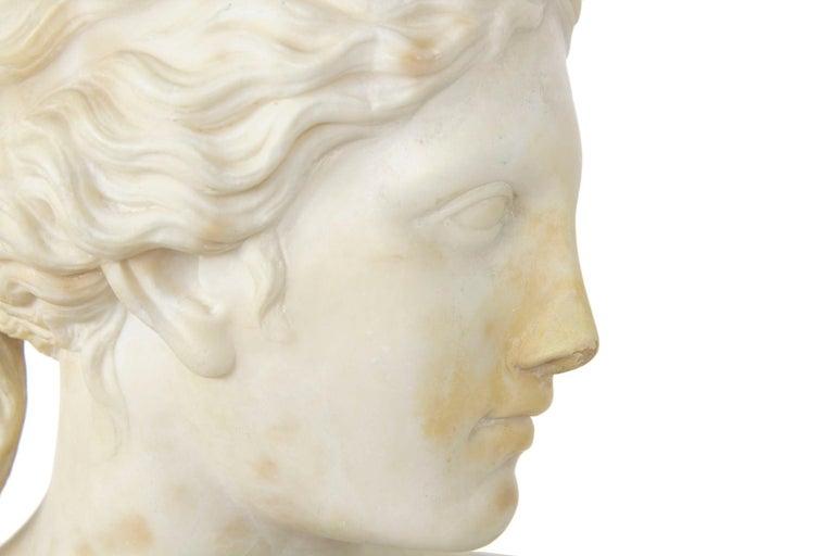 Italian 19th Century Grand Tour Marble Bust of Capitoline Venus 17