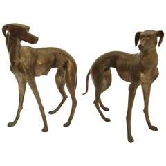 Italian Bronze Greyhounds