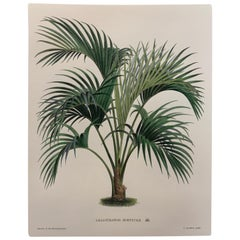 Italian Contemporary Hand Painted Botanical Print '3 of 4'