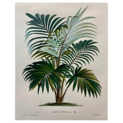 Italian Contemporary Hand Painted Botanical Print '4 of 4'
