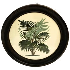 Italian Contemporary Hand Colored Print with Round Black Handmade Wooden Frame