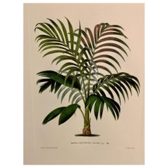 Italian Contemporary Hand Painted Botanical Print '1 of 4'