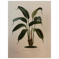 Italian Contemporary Hand Painted Botanical Print '2 of 4'