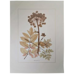 Italian Contemporary Hand Painted Botanical Print Representing Rosy Angelica