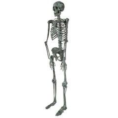 Italian Early 20th Century Skeleton Statue