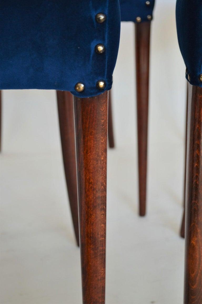 Italian Midcentury Beechwood Dining Chairs Restored in Blue Velvet, 1950s For Sale 7