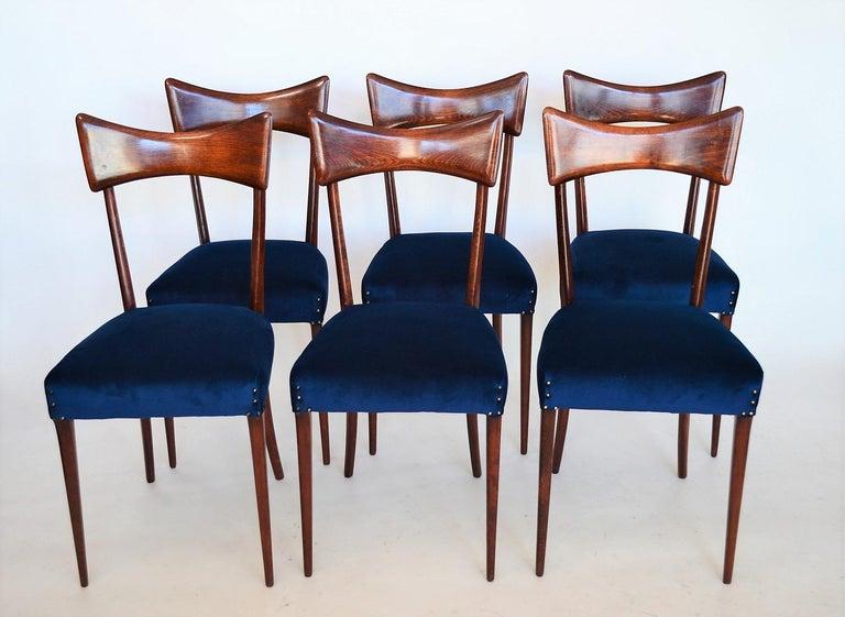 Stained Italian Midcentury Beechwood Dining Chairs Restored in Blue Velvet, 1950s For Sale