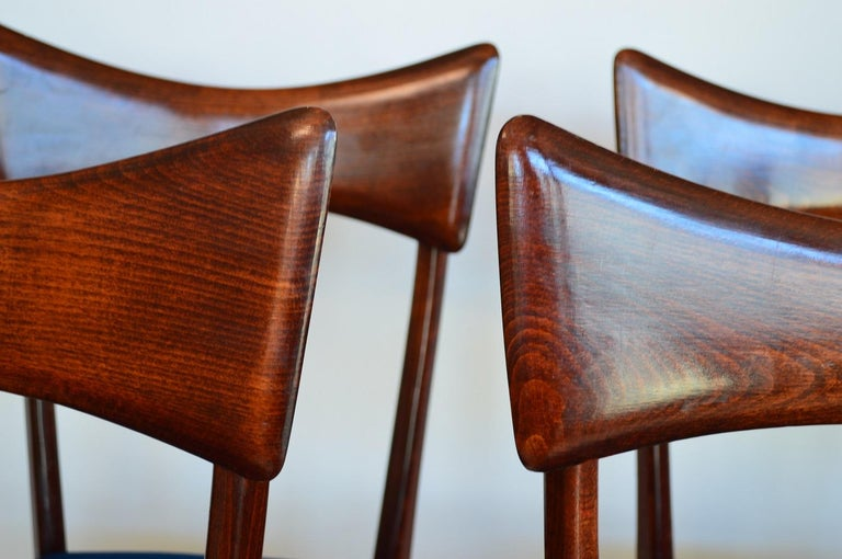 Mid-20th Century Italian Midcentury Beechwood Dining Chairs Restored in Blue Velvet, 1950s For Sale