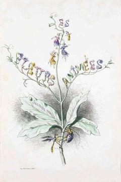 Frontispiece - Les Fleurs Animées Vol.II - Lithograph by J.J. Grandville - 1847