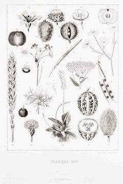 Planche 2 - Les Fleurs Animées Vol.II - Lithograph by J.J. Grandville - 1847