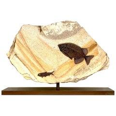 'Jack and Jill' Rotating Fossilised Fish Plate