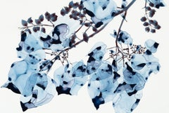 Blue Wash Cs1, Horizontal Botanical Painting on Mylar in Navy Blue and Brown