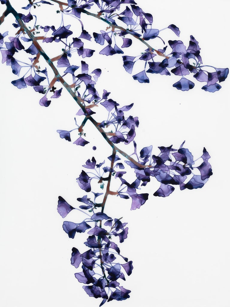 Gingko leaves in deep hues of purple and lavender on delicate brown branches with hints of teal are striking against the pristine white background of this vertical painting in acrylic on Mylar.   Battenfield's works on Mylar require mounting and